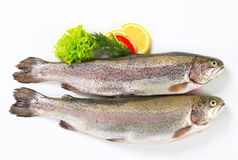 Two fresh trout Stock Images