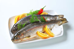Two fresh trout. Studio shot of two fresh trout Royalty Free Stock Image