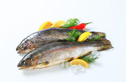 Two fresh trout. Studio shot of two fresh trout Stock Photo