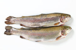 Two fresh trout Royalty Free Stock Photography