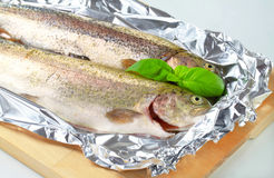 Two fresh trout on tinfoil Stock Photography