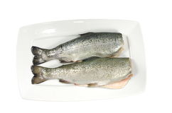 Two fresh trout Royalty Free Stock Image