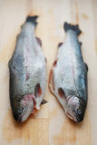 Fresh trout Royalty Free Stock Photos