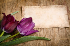 Two fresh tulips and card Stock Photography