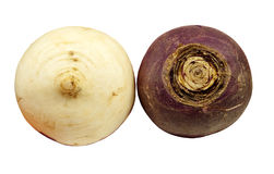 Two fresh turnips Stock Photography