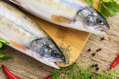 Two fresh uncooked fish one kind of salmon with aromatic herbs on wooden cutting board Royalty Free Stock Photo