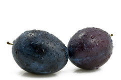 Two Fresh And Wet Plums Stock Photography