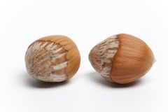 Two fresh wild Hazelnuts Stock Photo