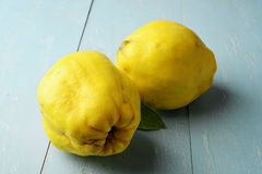 Two fresh yellow quinces. Fruit on rustic wooden table Royalty Free Stock Photo