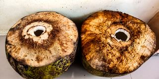 Two fresh young coconuts taken from the water stock photo