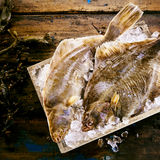 Two freshly caught flatfish in a crate of ice. Two freshly caught flatfish, either halibut or sole, in a crate of crushed ice on a rustic wooden table with fresh Stock Photos