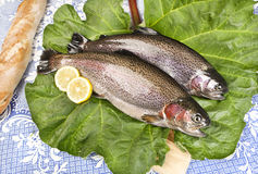 Two freshly caught trouts on a rhubarb leaf served. On a wooden board with crusty bread, blue tablecloth with embroidered flowers, close-up Royalty Free Stock Photos
