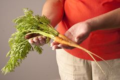 Two freshly picked young carrots Royalty Free Stock Photography