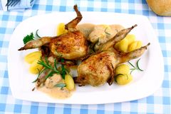 Two fried quail with gravy, gnocchi, rosemary and sauces Stock Images