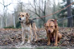 Two friend dogs in park. Siting and standing and looking somewhere sadly Royalty Free Stock Photo