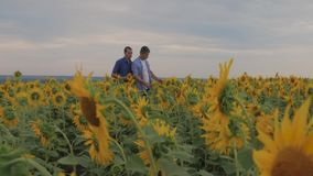 Two friend farmer rancher ,funny around situation on the sunflower field. Partner farmers men analyzing sunflower field. Collaboration and talking about harvest stock video