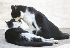 Two friendly cats kissing in summer day Royalty Free Stock Photos