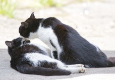 Two friendly cats kissing in summer day Stock Photography