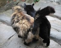 Two friendly cats in a medieval village royalty free stock images