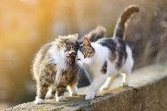 Two friendly cats. On spring Stock Images