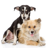 Two friendly dogs. isolated on white background Royalty Free Stock Photos