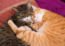 Two friendly pet cat Stock Photos