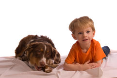 Two Friends. Caucasian toddler posing with his brown Australian Shepherd puppy. Isolated on white, both model released Stock Image