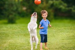 Two friends boy kid and his dog playing with basketball ball at backyard lawn