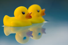 Two friends off for an adventure. Two ducks on a mirror lake surface heading into the unknown Stock Photos