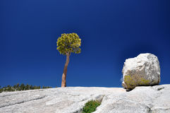 Two friends - Tree and stone Royalty Free Stock Photography