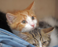 Two frightened kitten Stock Photo