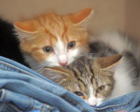 Two frightened kitten Royalty Free Stock Photos