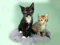 Two Wide-Eyed Kittens - A Tabby and a Tuxedo. A Tabby and a Tuxedo - Two wide-eyed felines sitting on a pillow Stock Photography