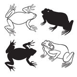 Two frog silhouettes Royalty Free Stock Images