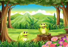 Two frogs at the forest. Illustration of the two frogs at the forest Royalty Free Stock Photography