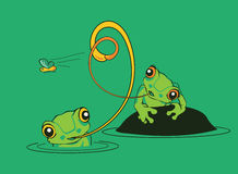 Two frogs in a pond trying to catch a fly Stock Photo