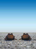 Two Frogs Toad on the road Royalty Free Stock Photos