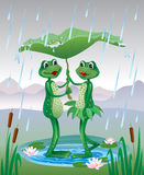 Two frogs under an umbrella from a leaf Stock Photos