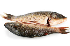 Two frozen gutted carp. Stock Image