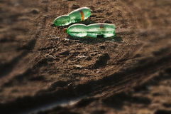 Two frozen plastic bottles lying on the ground Stock Image