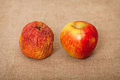Two fruit against canvas - bad and good apples royalty free stock photos