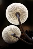 Two fungi. Viewed from low angle Stock Photography