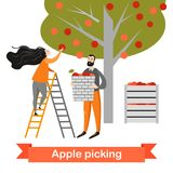Two funny cartoon characters are picking apples in the garden. Harvest time. Royalty Free Stock Photo