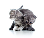 Two funny cat kittens play together Stock Photography