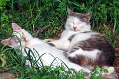 Two funny cats. On green grass royalty free stock images