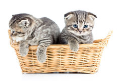 Two funny cats kittens in wicker basket Stock Photography