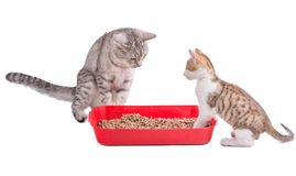 Two funny cats playing in a cat toilet. Isolated with clipping path royalty free stock photo