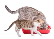 Two funny cats playing in a cat toilet. Isolated with clipping path stock photo