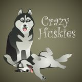 Two funny crazy Huskies. Two vector funny crazy Huskies are relaxing Royalty Free Stock Photography