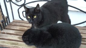 Two funny cute domestic black cat playing on the bench outdoors, resting relaxing, funny tails, green eyes. Black cat close up and yellow eyes stock video